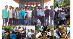 Green Hills Tree Plantation