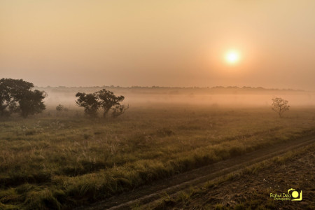 Rahul Deo Photography - Dudhwa WLS Landscape