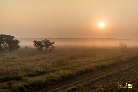 Rahul Deo Photography - Dudhwa WLS Landscape
