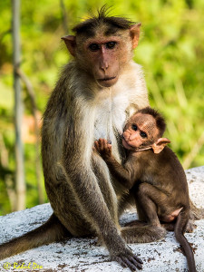 Rahul Deo Photography - Wildlife