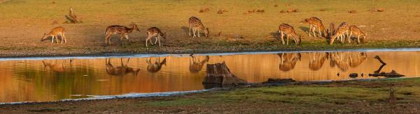 Rahul Deo Wildlife Photography