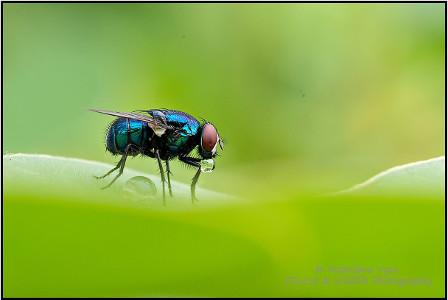 Matrishva Vyas Photography - Macro Photography