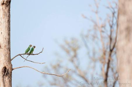 Matrishva Vyas Photography