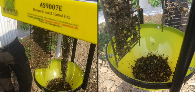 Microbiz Network India - Electronic Pest Control Trap - Trapped Insects