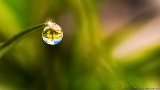 Mohammed Ibrahim Photography - Nature