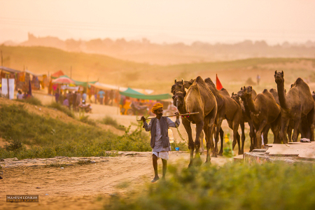 Mahesh Lonkar Photography - Camel fair Pushkar